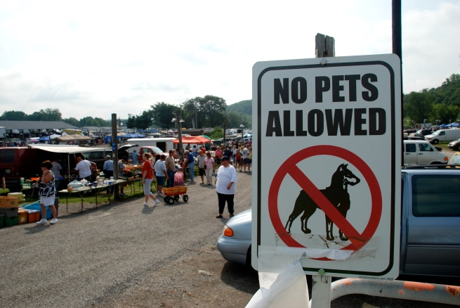 """No pets"" reads this sign at the entrance to the flea market....."